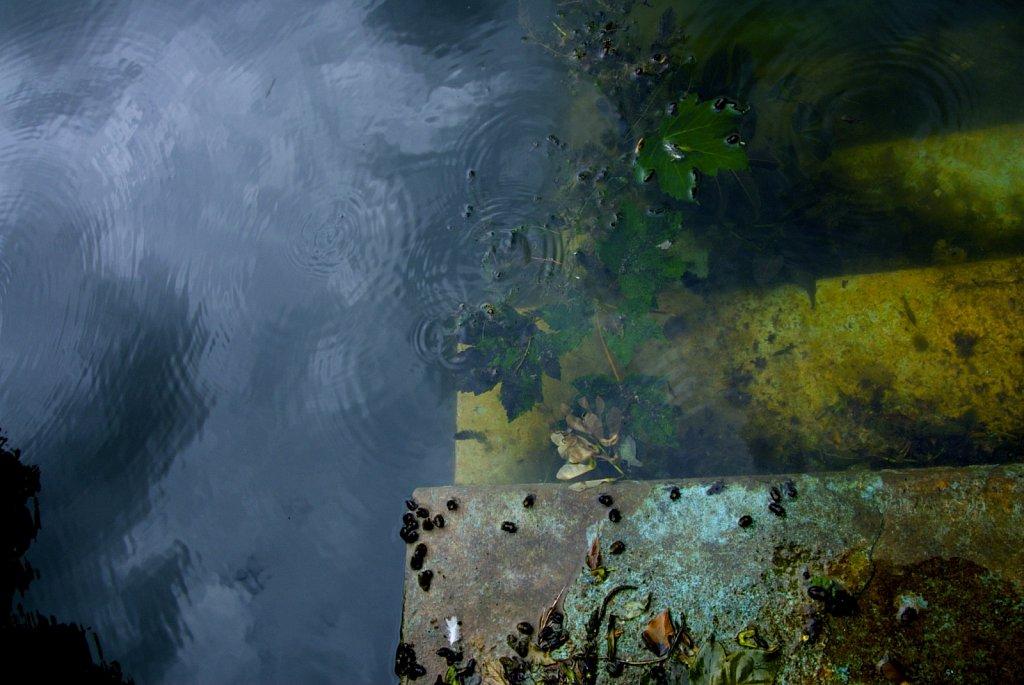 4water.jpg